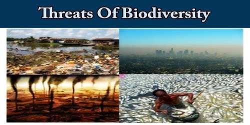 Threats Of Biodiversity