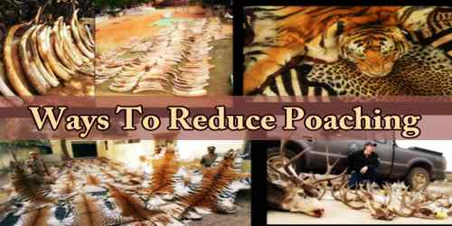 Ways To Reduce Poaching