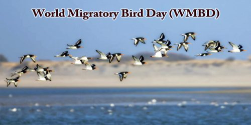 World Migratory Bird Day (WMBD)