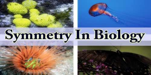 Symmetry In Biology