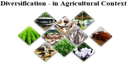 Diversification – in Agricultural Context