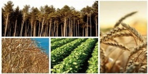 Energy Crops in Agribusiness