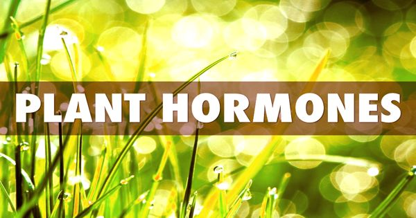 Plant Hormones – affecting plant growth and yield production