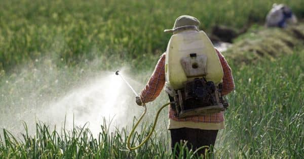 The pesticides and pollution will kill us – an open Speech