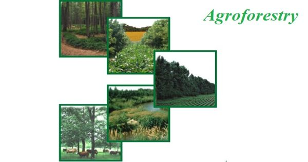 Agroforestry – an agricultural system