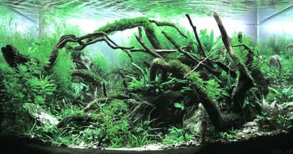 Aquascaping – a craft of arranging aquatic plants