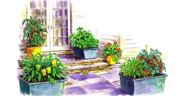 Container Gardening – an easy way to grow vegetables