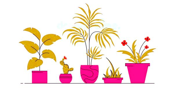 Houseplant Care – creating a more welcoming house