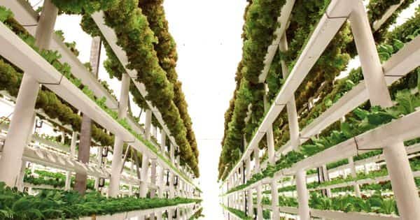 Vertical farming – practice of growing crops in vertically stacked layers