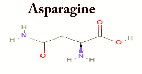 Asparagine (Structure, Function, Properties)