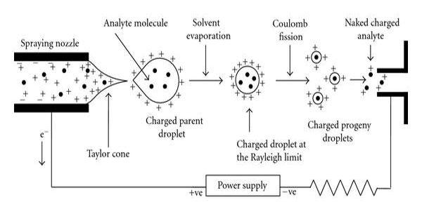 Electrospray Ionization – a soft ionization technique