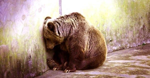 Should wild animals be kept in zoos – an open Speech
