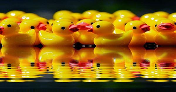 28,000 Rubber Ducks Accidentally Embarked On an Epic Ocean Current Study In 1992
