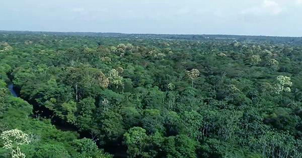 As Covid-19 Continues, Deforestation in the Amazon Soars