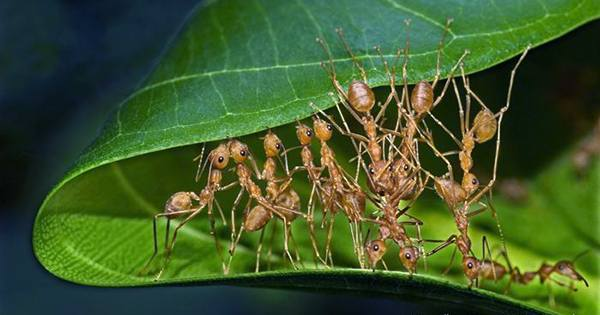 As Reported Previously, the Insect Apocalypse Is Not As Universal