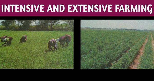 Difference between Intensive and Extensive Farming