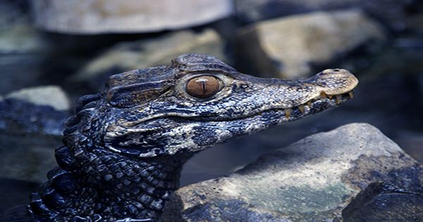 If You Want To See a Bird Swallow an Alligator Whole, Today Is Your Lucky Day