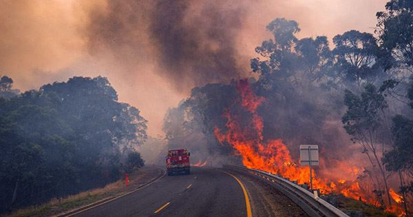 Logging Fueled Last Year's Catastrophic Megafires in Australia and Could Spark Repeats