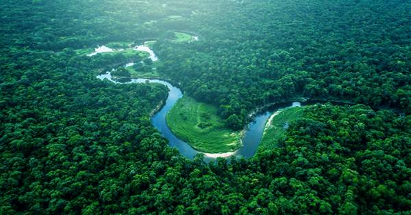 The Amazon Rainforest Is About To Cross an Irreversible Threshold That Will Turn It into A Savanna, Top Scientists Say