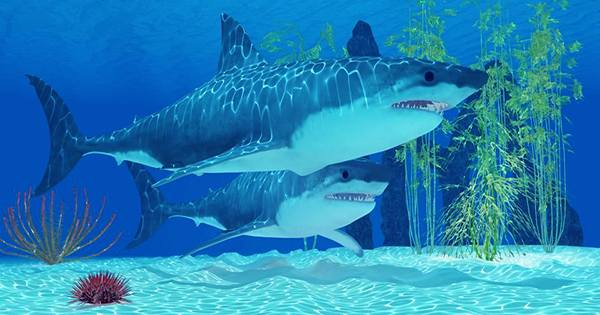 The Megalodon Babies Were Larger Than Adult Humans and Cannibalized Their Siblings in the Womb