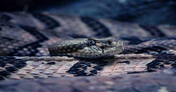 The Scientists Discover Tree Snakes Have a New Move: Lasso Locomotion