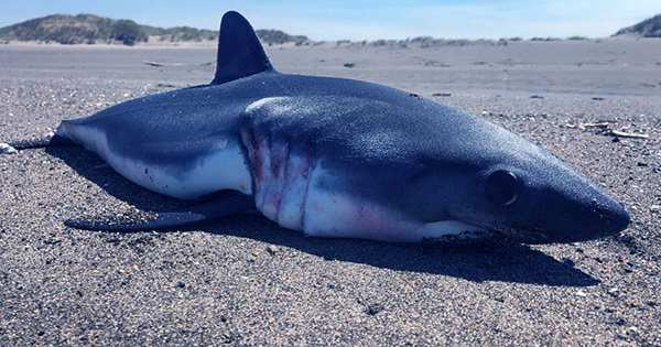 Two-Meter Dead Shark Washes Up On Central Florida Beach