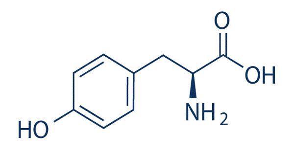 Tyrosine – a non-essential amino acid