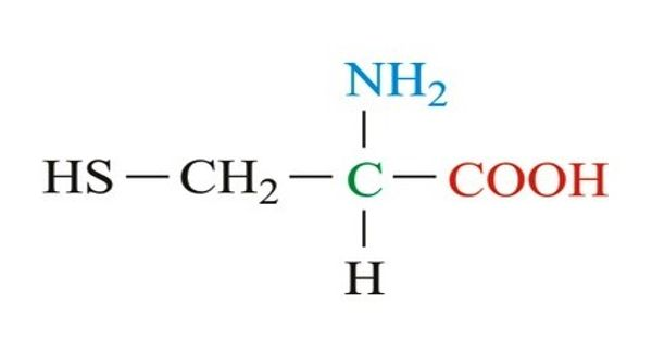 Cysteine – a nonessential amino acid