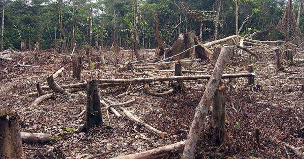 Deforestation – an Open Speech