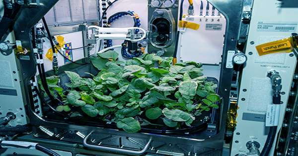Astronaut Performs First-Ever Plant Transplant in Space