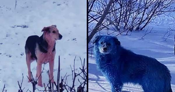 Bright Blue Dogs Spotted Roaming Abandoned Chemical Plant In Russia