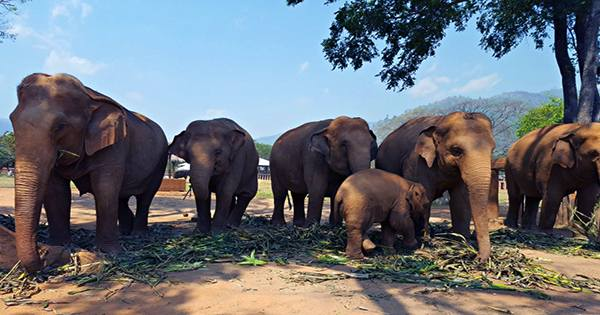 Elephants Have an Arsenal of Genetic Defense Mechanisms to Fight Cancer, Research Suggests