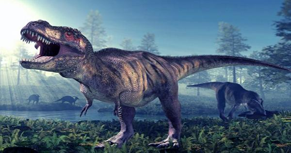 How Big Were Baby Tyrannosaurs? About the Size of a Border collie Dog, Study Finds