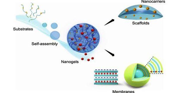 Nanogel – a nanosized hydrogel