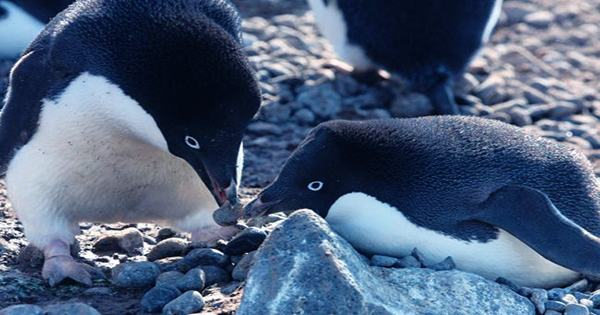 Science Weighs in on What is Really Happening In That Penguin Gangs Video