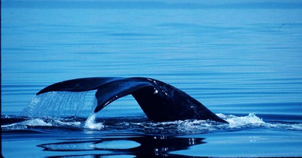 Scientists Use Whale Songs To Reveal Hidden Features Of The Sea Floor