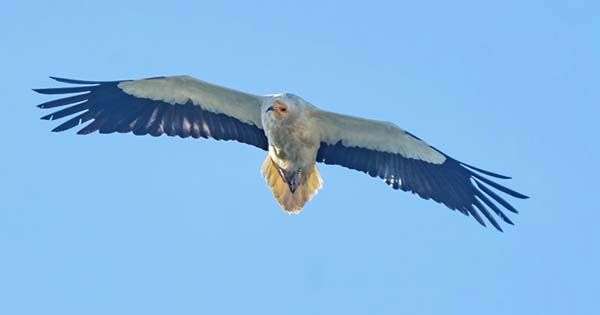 Smart Cameras That Stop Wind Turbines When Birds Approach Massively Reduce Eagle Deaths