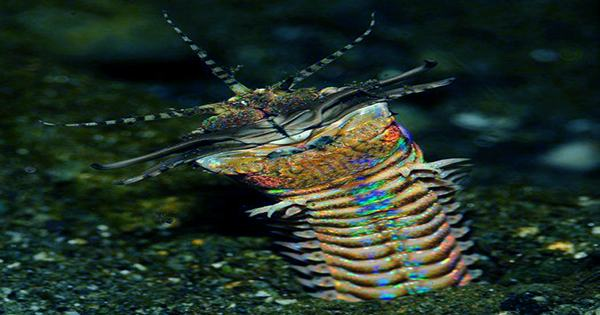 The Story Behind the Bobbitt Worm's Name Is Grimmer Than the Worm Itself