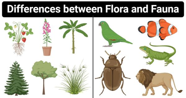 Difference between Flora and Fauna