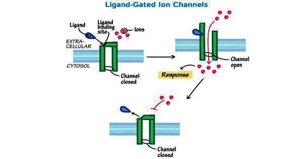 Ligand – a biochemical substance