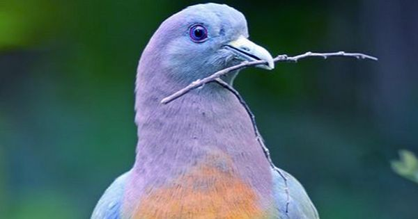 "The Internet Is Swooning Over This ""Hot Pigeon"""
