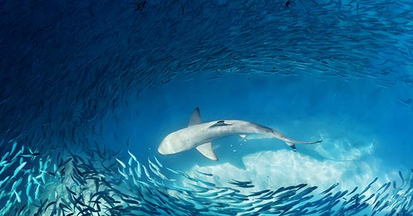 """This """"Winged"""" Shark Was Soaring Through The Ocean 93 Million Years Ago"""
