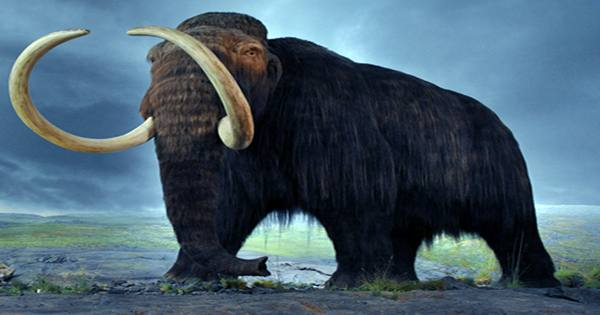 Woolly Mammoths May Have Lived Alongside The First Humans In New England