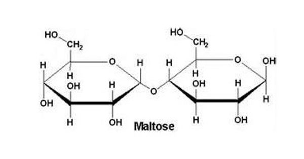 Maltose – a type of carbohydrate