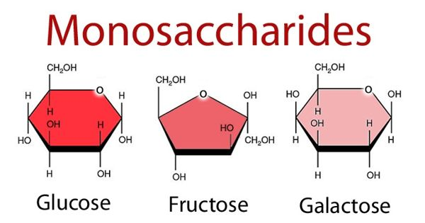 Monosaccharide – a most basic form of carbohydrates