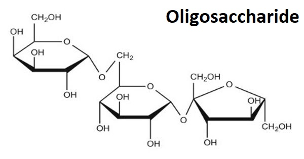 Oligosaccharide – a carbohydrate