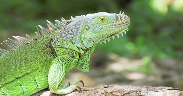 "Animal Control Called To Brown ""Iguana"" In Poland, It Was a Croissant"