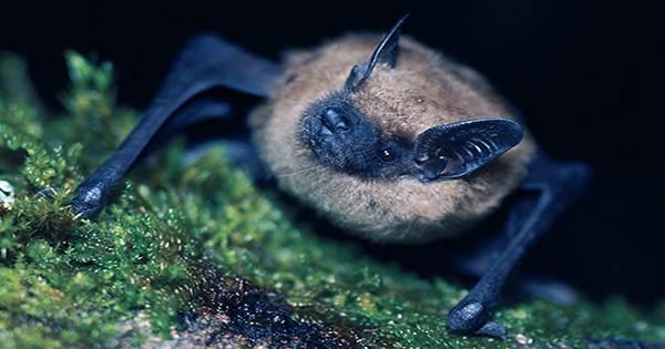 """Fireflies Wear """"Musical Armor"""" To Avoid Getting Eaten By Bats"""