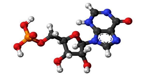 Inosinic acid – a nucleotide