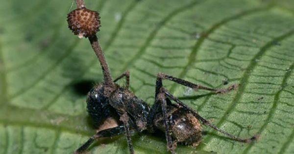 Insects Stole A Plant Gene To Evade Plant Defences